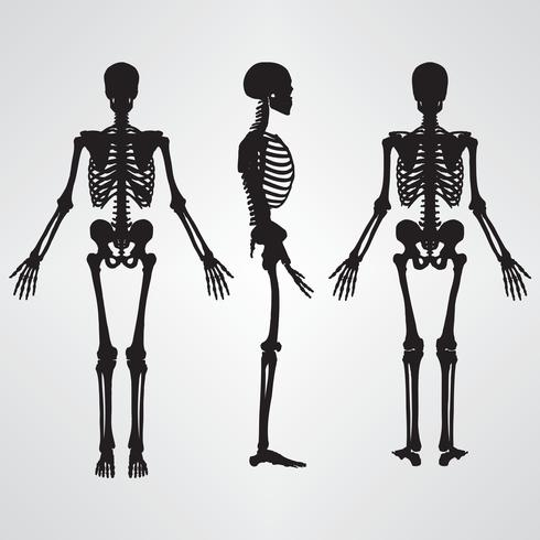 Illustration vectorielle de squelette humain silhouette couleur noire vecteur