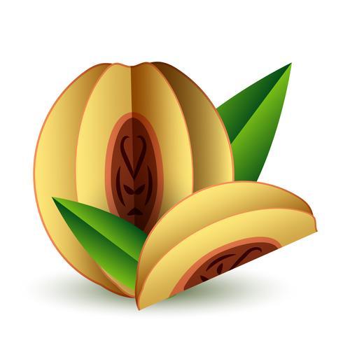 Papier de fruits exotiques été tropical vecteur coupés volumétriques. Origami. Objet de couleur isolé sur fond blanc. Abricot et Tranche de Pêche Orange
