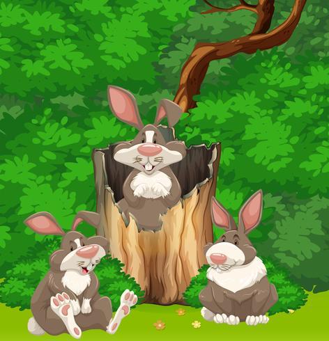 Trois lapins dans les bois vecteur