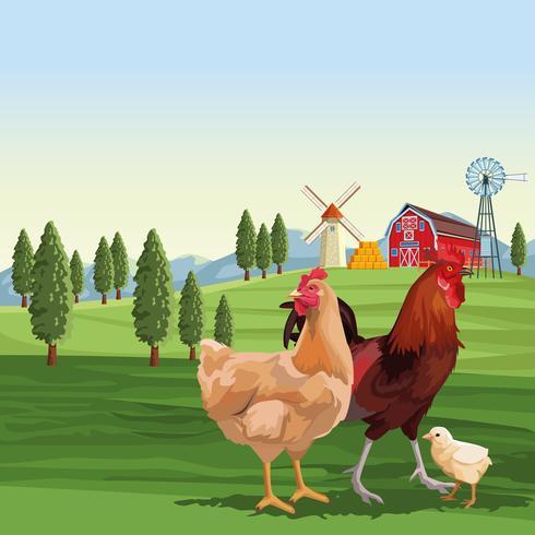 Poulets et coq sur le paysage vecteur