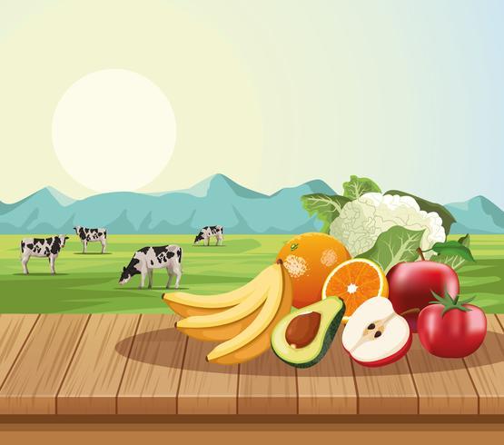 Fruits et légumes vecteur