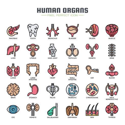 Icônes de traits fins d'organes humains vecteur
