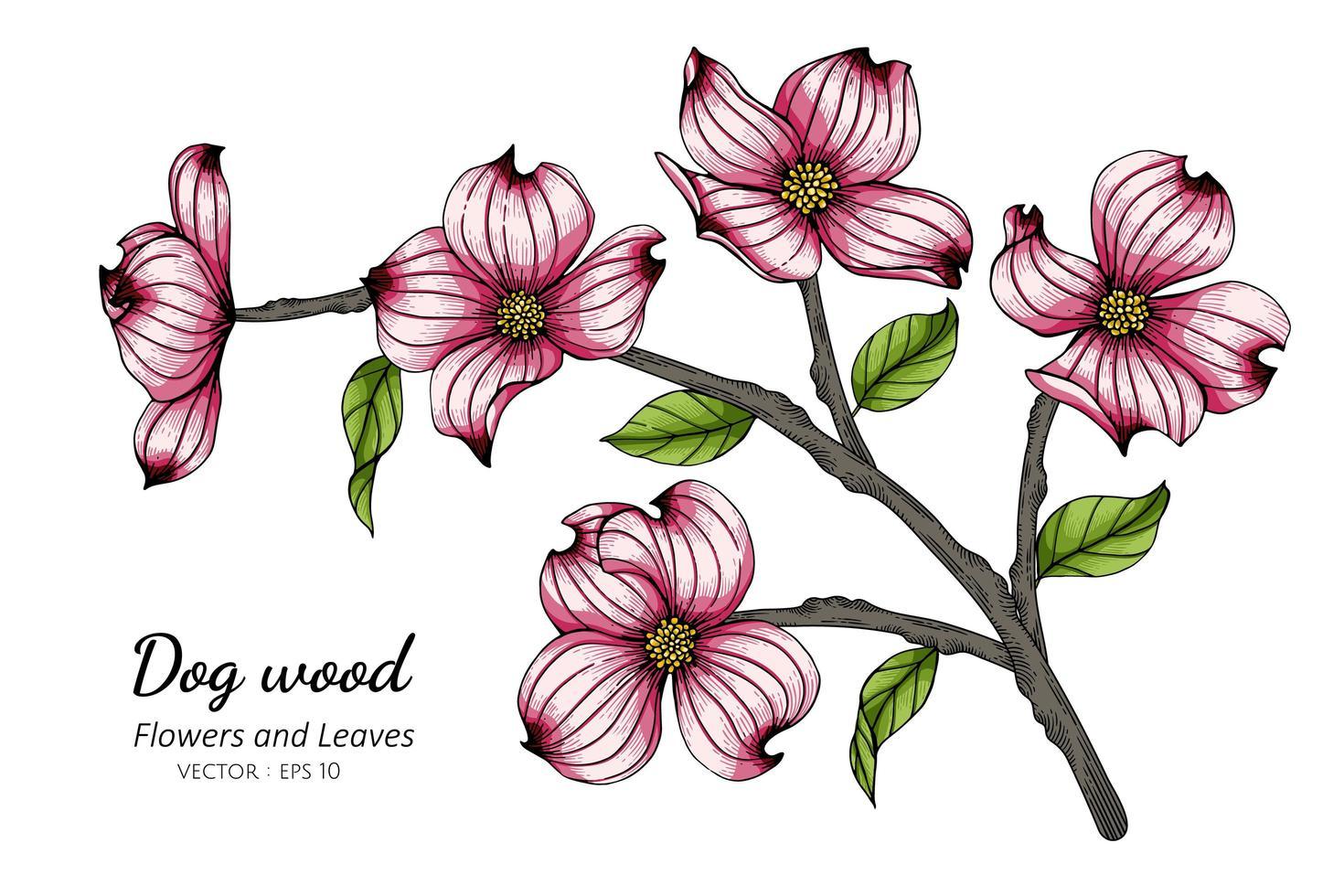 dessin de fleur et feuille de cornouiller rose vecteur
