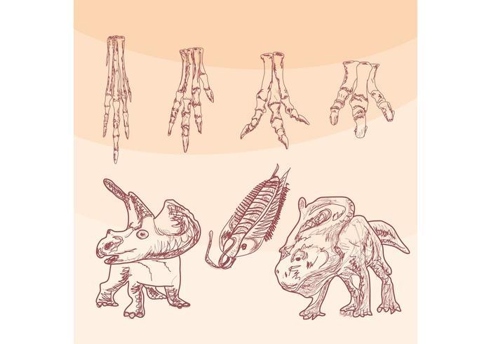 Pieds vectoriels aux os de dinosaures vecteur