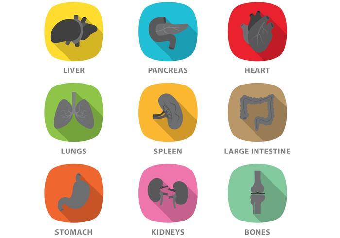 Vecteurs d'organes plats vecteur