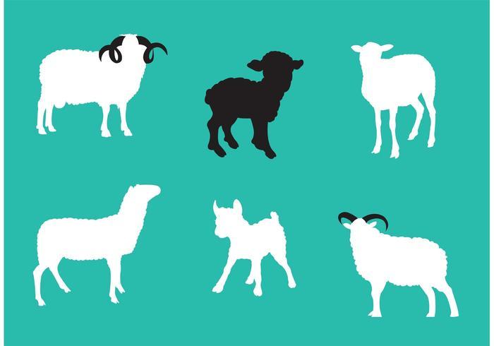 Vecteurs isolés de moutons vecteur