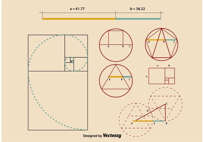 Proportions Golden Ratio vecteur