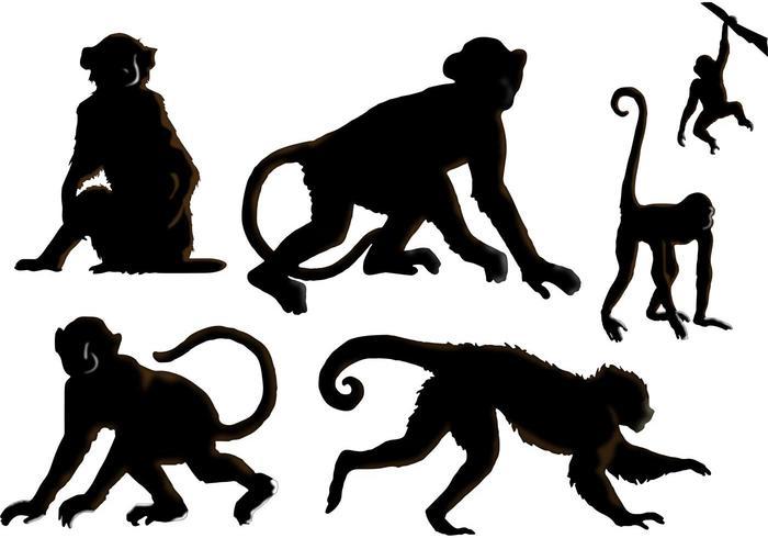Les vecteurs de singes vecteur