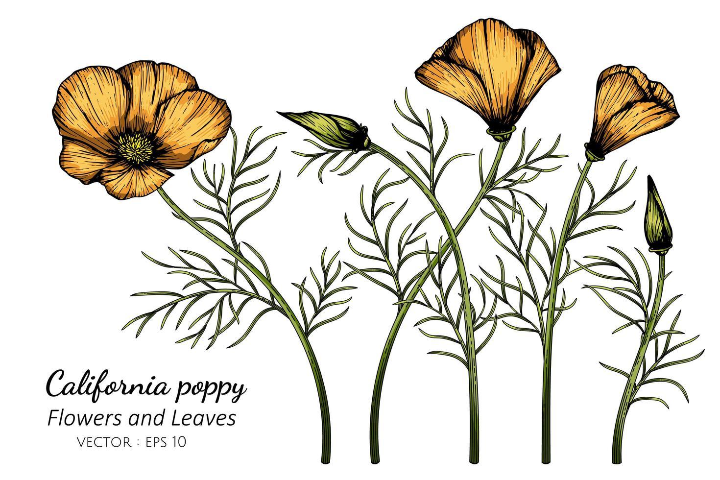 dessin de fleur de pavot orange californie vecteur