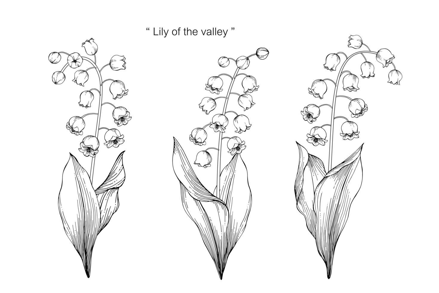 fleur de muguet et conception de feuilles dessinées à la main vecteur