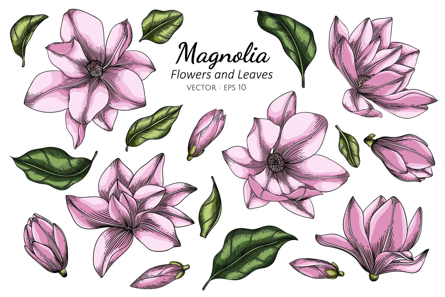 dessin de fleur et feuille de magnolia rose vecteur