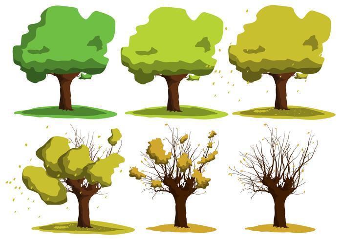 Vecteurs croissants de l'arbre d'acacia vecteur