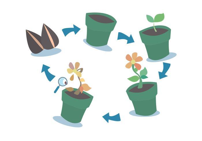 Ensemble vectoriel de cycle de croissance végétale