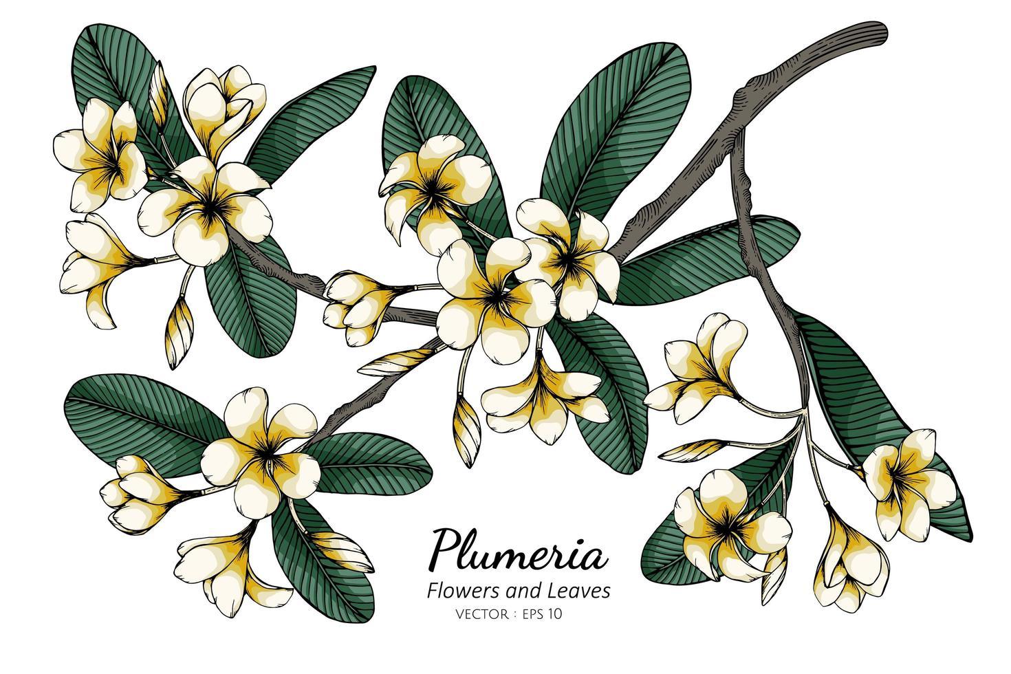 feuilles et fleurs de plumeria vecteur