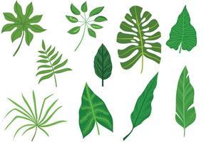 Vecteurs libres de feuilles tropicales vecteur