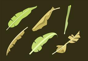 Vecteurs de feuilles de banane