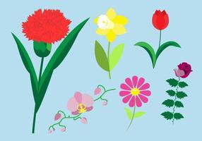 Ensemble d'espèces de fleurs vecteur