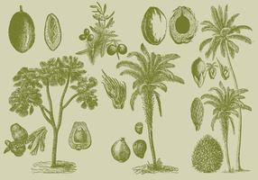 Vieux palmiers à dessin vecteur