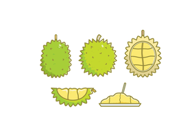 Illustrations libres de droits de Durian