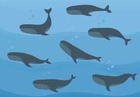 Vecteur des baleines libres