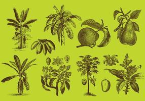 Dessins d'arbres fruitiers vecteur