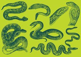 Vecteurs de serpent à dessin de style ancien