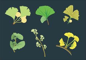 Ginko feuilles vecteur