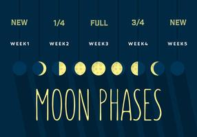 Phase de lune vecteur