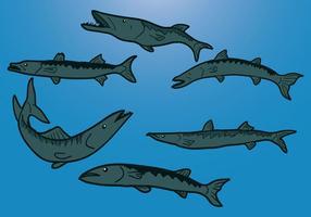 Vecteur barracuda