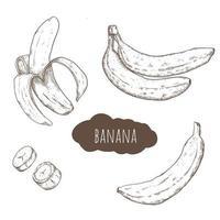 ensemble dessiné à la main de banane
