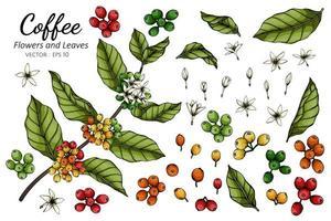 dessin de fleurs et de feuilles de café vecteur