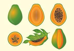 Papaya fruits vectro vecteur