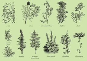 Médecine et plantes ornementales vecteur