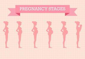 Vecteur gratuit des étapes de grossesse