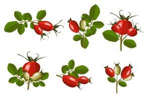 Vecteur isolé de rose-rouge