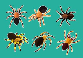Vector d'illustration de la Tarantule