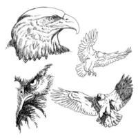 collection de croquis d'aigles vecteur