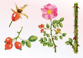 Aquarelle florale vecteur