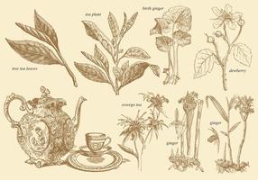Plantes à thé de style ancien vecteur