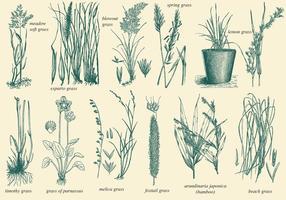 Vecteurs de l'herbe sauvage