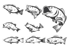 Vecteurs de poissons de basse
