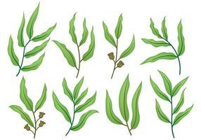 Vector d'icônes d'eucalyptus gratuit
