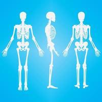 squelette humain silhouette blanc couleur vecteur