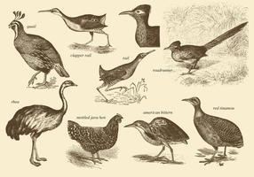 Dessins d'oiseaux sans vol vecteur