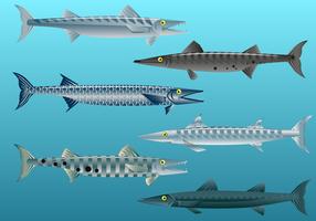 Vecteur de poissons barracuda gratuit