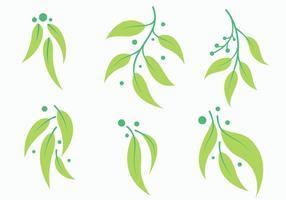 Vecteur gratuit d'eucalyptus 1