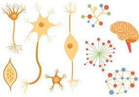 Vecteurs de neurones libres vecteur