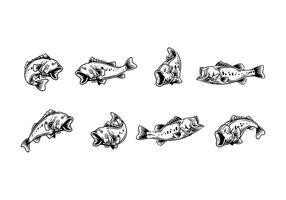 Vecteur de largemouth bass