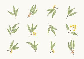 Icônes plates libres d'eucalyptus vecteur