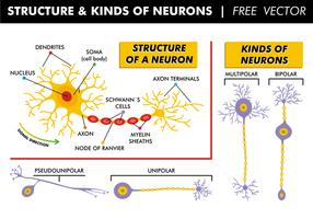 Structure et types de vecteurs gratuits de neurones vecteur